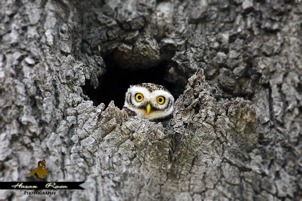 'The Hide n seek' found at https://flic.kr/p/roXc2S by world.is.beautiful (https://flickr.com/people/world_is_beautiful) used under Creative Commons Attribution License (http://creativecommons.org/licenses/by/2.0/)