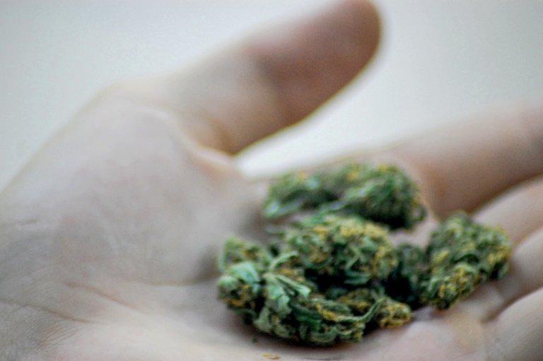 'marijuana 2' found at https://flic.kr/p/7JCKGz by katherine_hitt (https://flickr.com/people/milkwhitegown) used under Creative Commons Attribution-NoDerivs License (http://creativecommons.org/licenses/by-nd/2.0/)